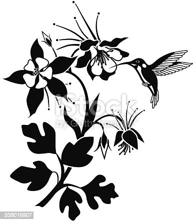 A vector illustration of a columbine flowering plant with hummingbird in black and white.