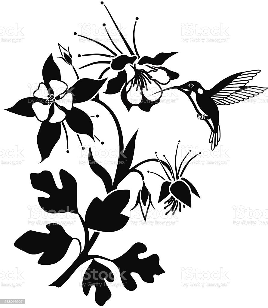 columbine flowering plant with hummingbird in black and white vector art illustration