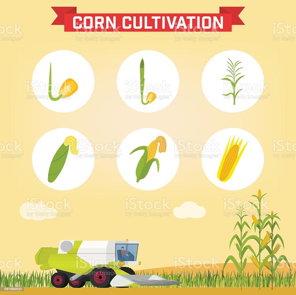 Combine for harvesting corn in the field. vector art illustration