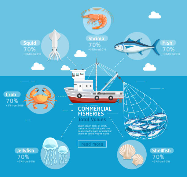 commercial fishing business plan infographics. - rybactwo stock illustrations