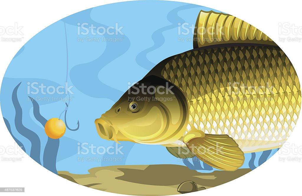Common carp catching on bait vector art illustration