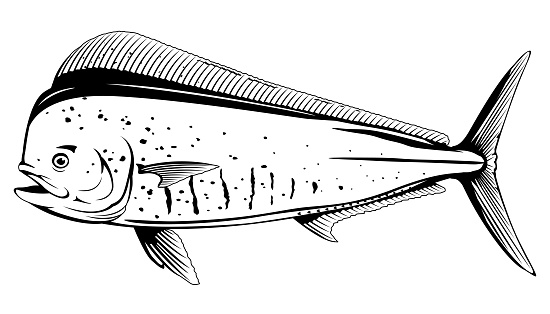 Common Dolphinfish Black and White Fish
