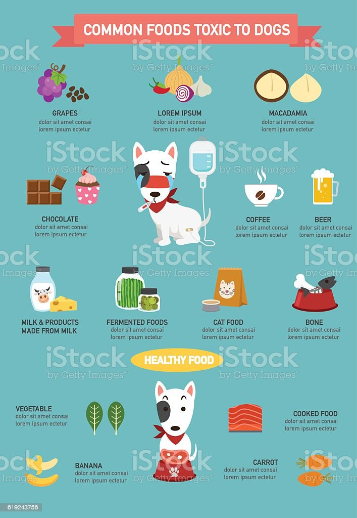 Common foods toxic to dogs infographic.illustration