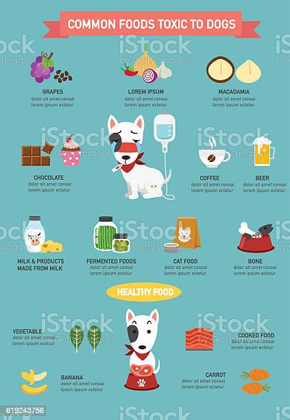 Common foods toxic to dogs infographicillustration vector id619243756?b=1&k=6&m=619243756&s=612x612&h= tcooc9x7thqinmvfmdljhbjelaxzitlw 9hnw1wyko=