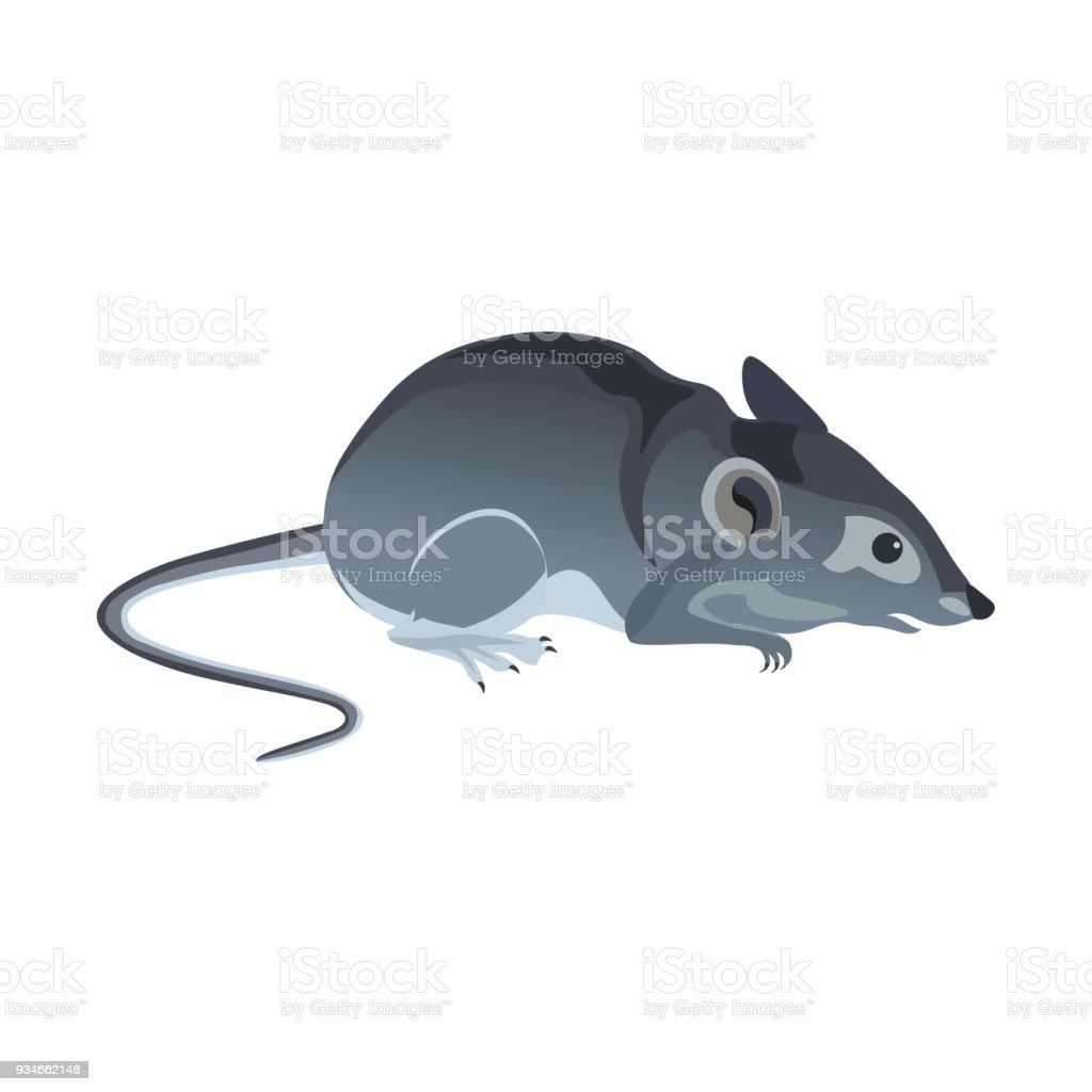 Common house mouse. vector art illustration