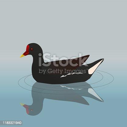istock Common moorhen 1183321940