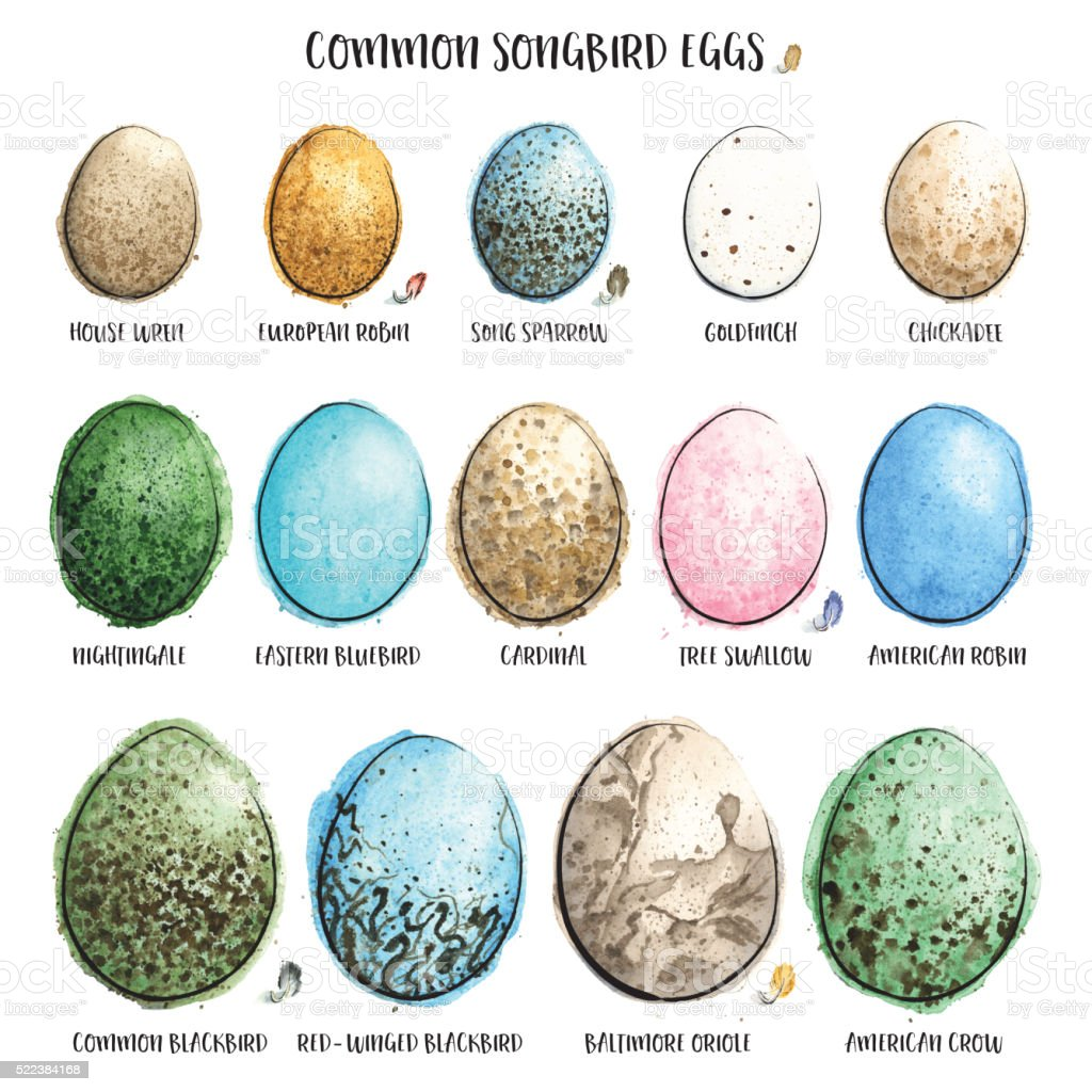 Common Songbird Eggs Painted in Watercolor. Vector Illustration. vector art illustration