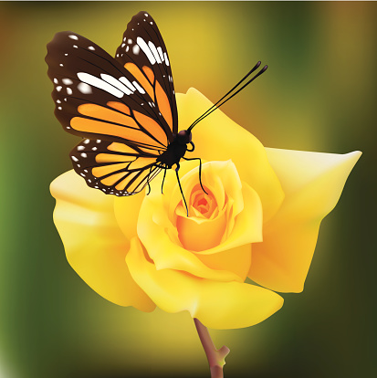 Common Tiger Butterfly On A Yellow Rose - Vector