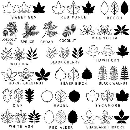 Common Tree Leaf Icons