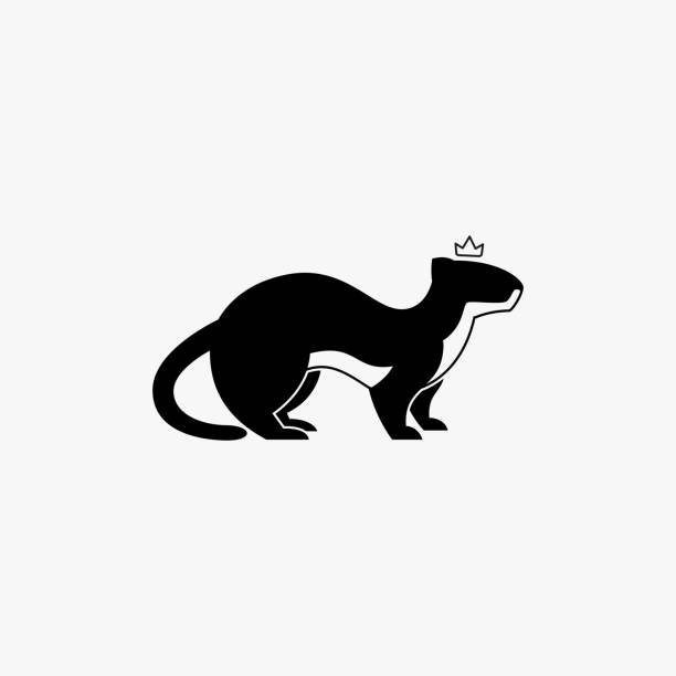 Common Weasels Illustration Vector Template Common Weasels Illustration Vector Template. Suitable for Creative Industry, Multimedia, entertainment, Educations, Shop, and any related business. ermine stock illustrations