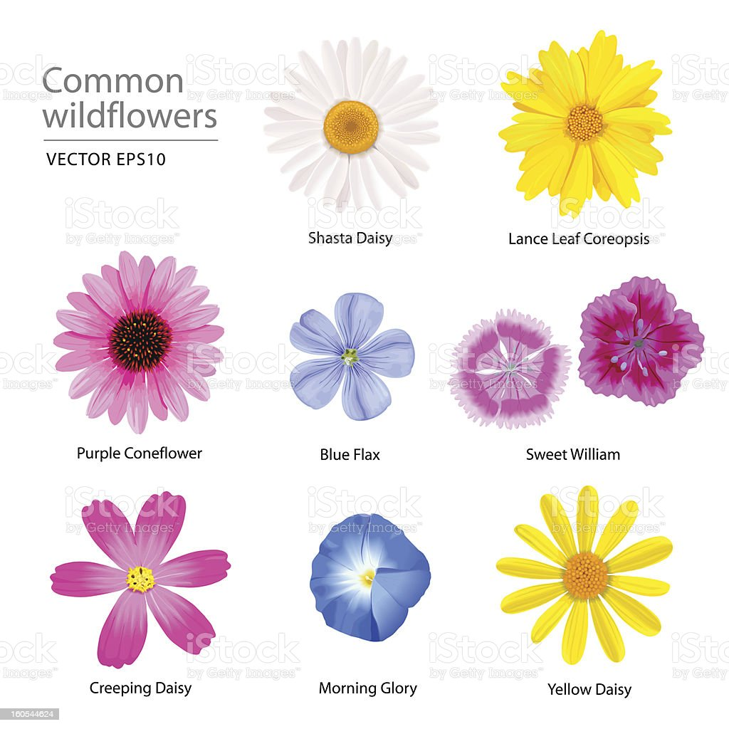 common wildflowers vector art illustration
