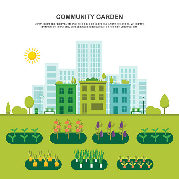 Community Vegetable Garden Colorful vector illustration of urban community garden in modern flat design. Easy to edit, elements are grouped, no effects. urban gardening stock illustrations