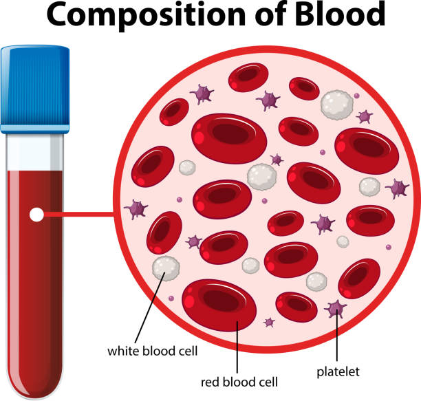 Composition of blood diagram Composition of blood diagram illustration platelet stock illustrations