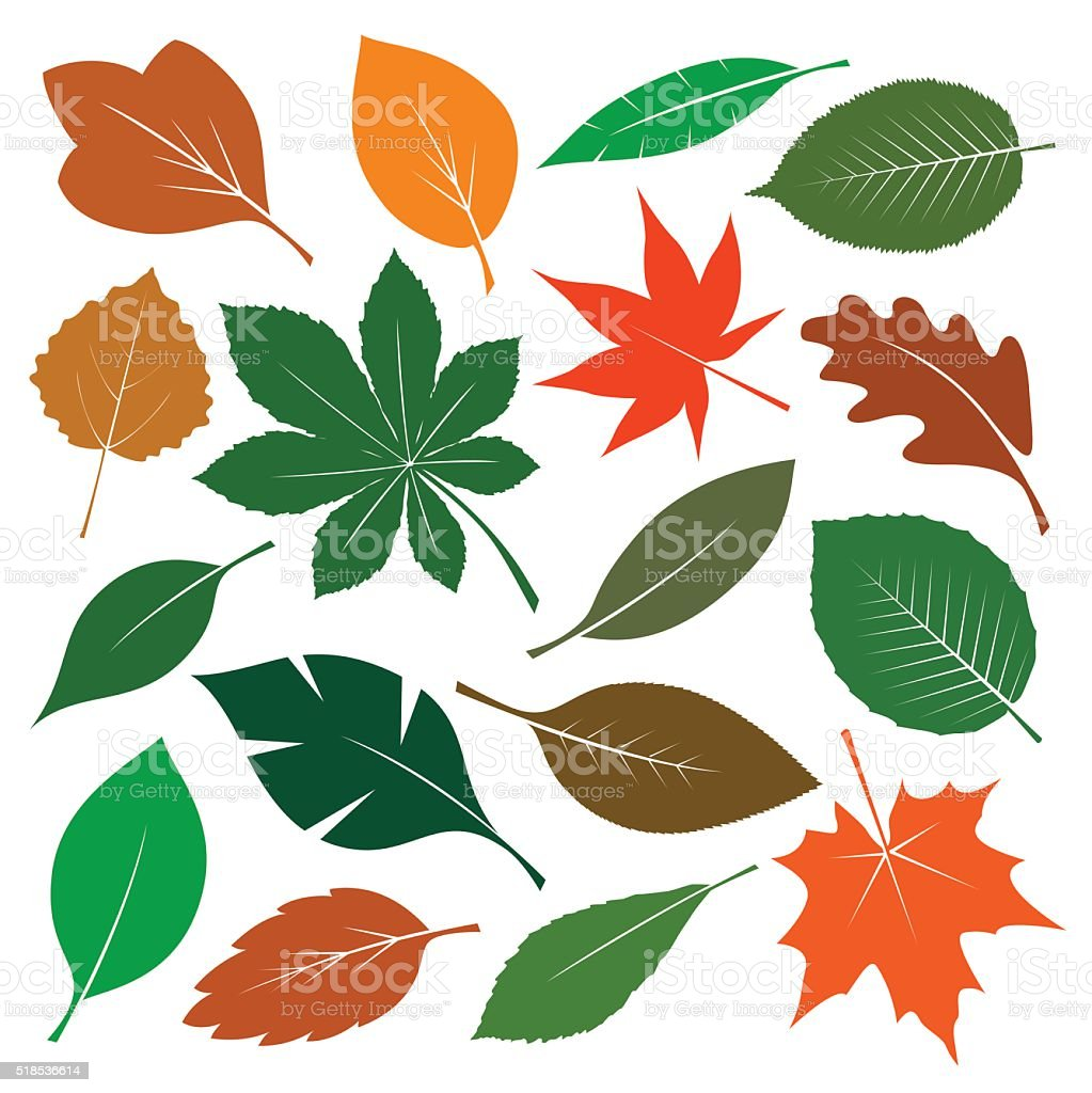 Composition of Color Leafs. Vector Illustration. vector art illustration