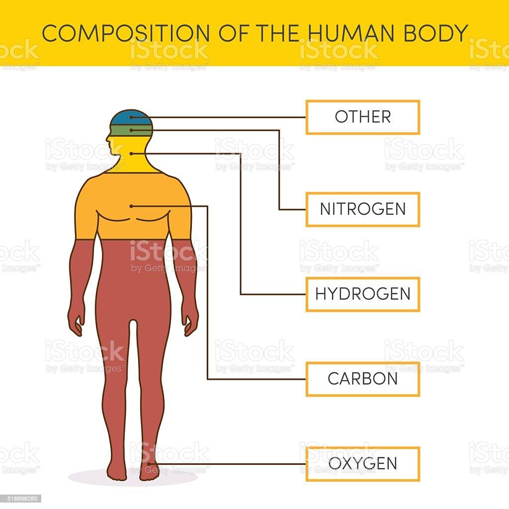 Zusammensetzung Der Menschlichen Körper Stock Vektor Art und mehr ...