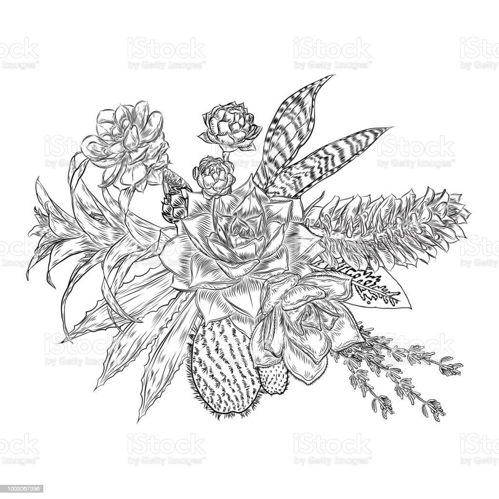 Composition De Plantes Grasses Cactus Plantes Vertes