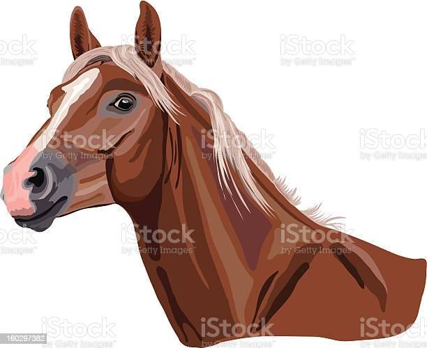 Computer image of gorgeous palomino horse vector id160297382?b=1&k=6&m=160297382&s=612x612&h=fy otiqmzkpld7k3d97qxtgel5osqla6fnow7adsyba=