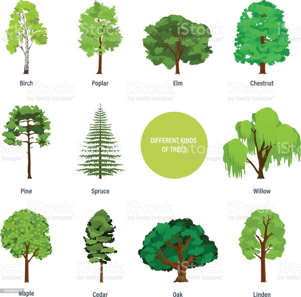 Concept of collection of modern different kinds of trees vector art illustration