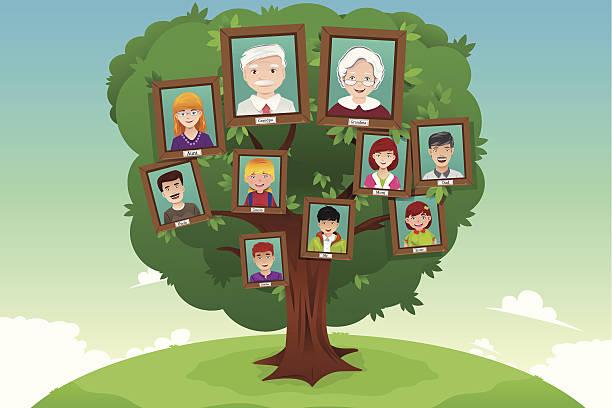 konzept der family tree - stammbäume stock-grafiken, -clipart, -cartoons und -symbole
