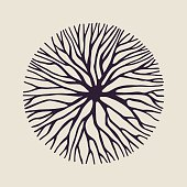 Concept tree branch circle shape illustration