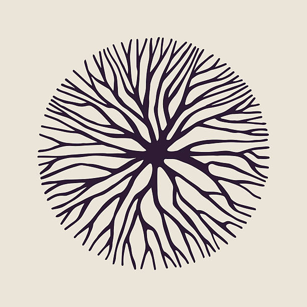 ilustracja kształtu okręgu gałęzi drzewa koncepcyjnego - gałąź część rośliny stock illustrations