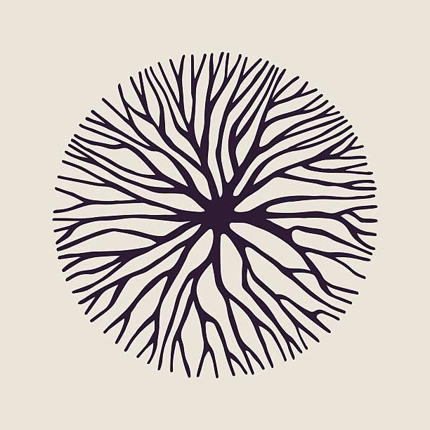 stockillustraties, clipart, cartoons en iconen met concept tree branch circle shape illustration - wortel plantdeel