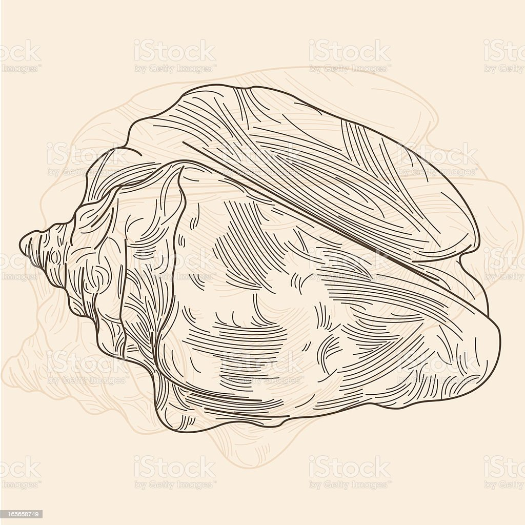 Conch Shell royalty-free stock vector art