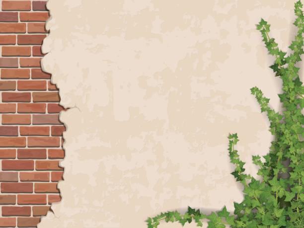 ilustrações de stock, clip art, desenhos animados e ícones de concrete wall ivy and brick - ivy building