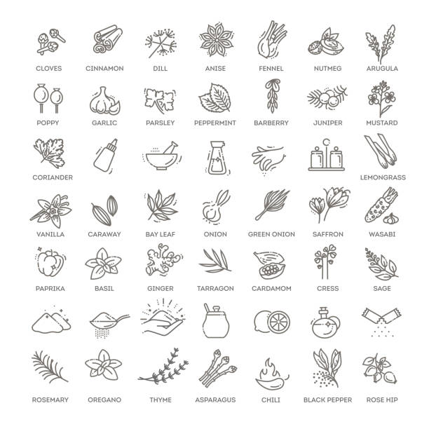 condiment icons set. outline set of condiment vector icons - лекарственная трава stock illustrations