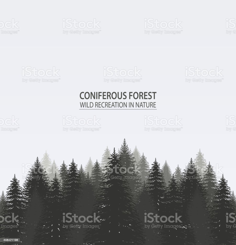 Coniferous pine forest. vector art illustration