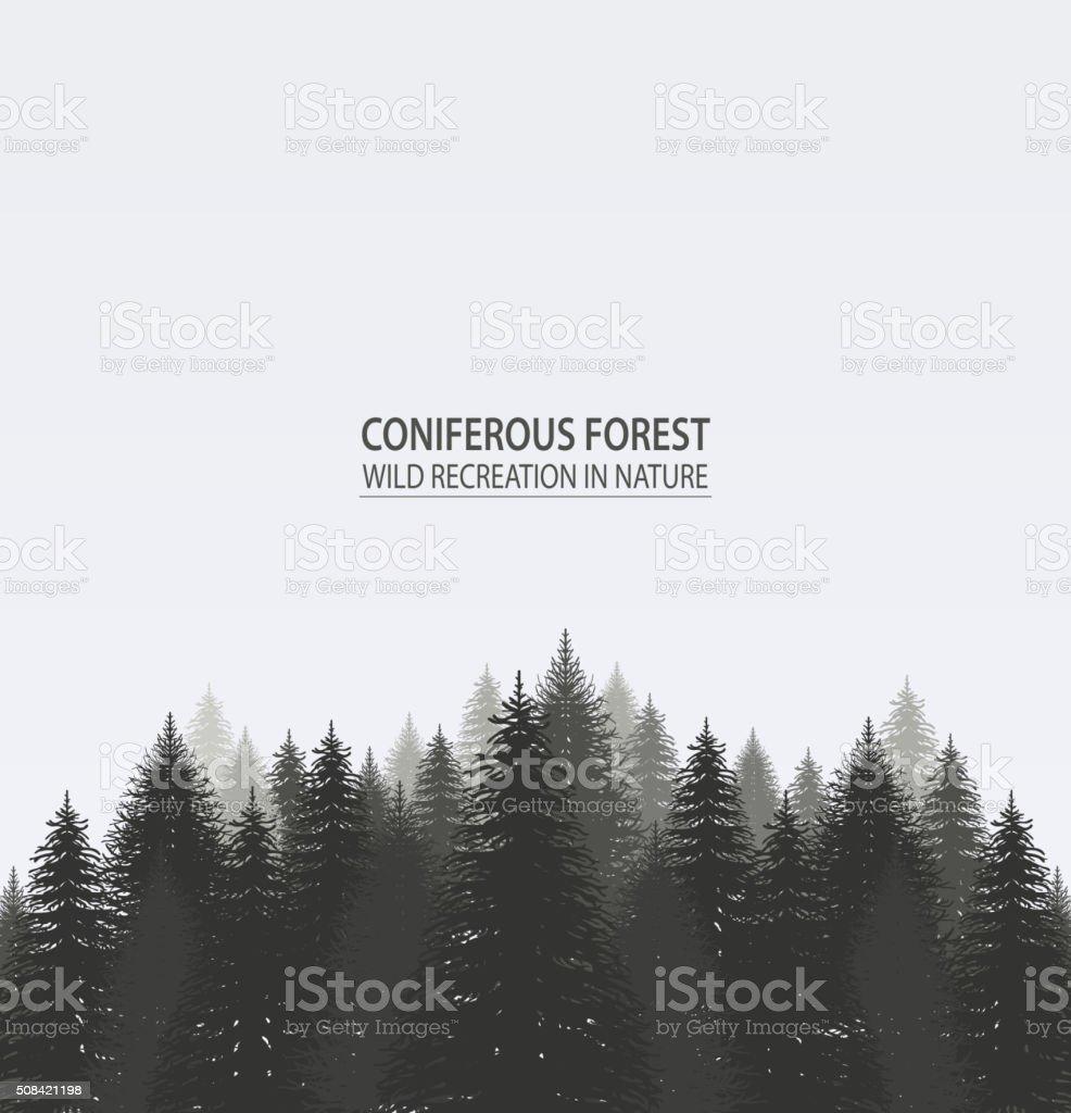 Conifères forêt de pins. - Illustration vectorielle