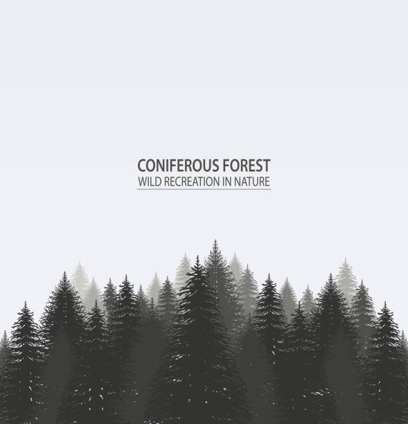 coniferous pine forest. - wildlife travel stock illustrations, clip art, cartoons, & icons