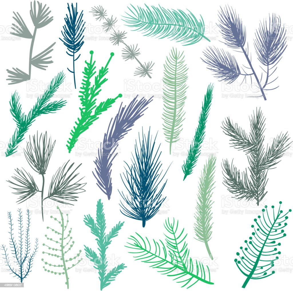 Coniferous tree branches set vector art illustration