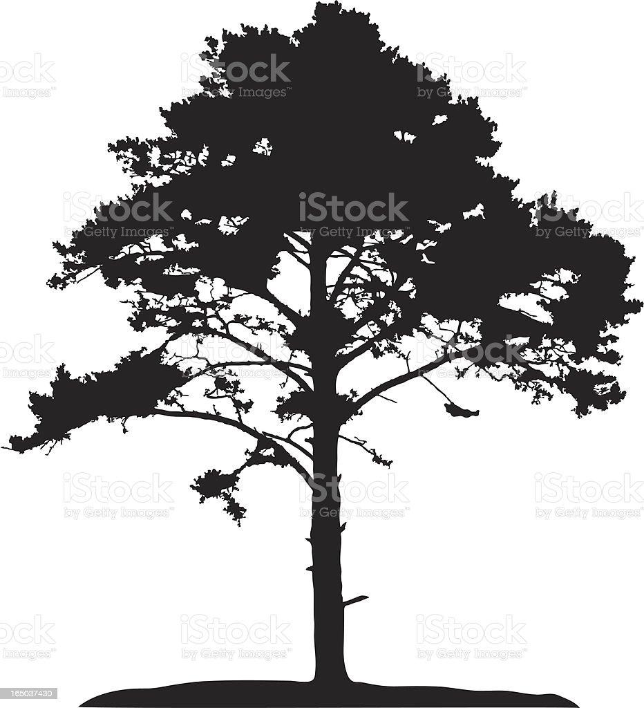 Coniferous tree, vector vector art illustration