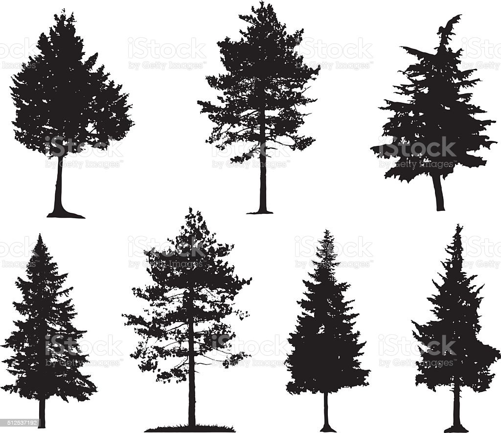 Coniferous Trees Silhouettes vector art illustration