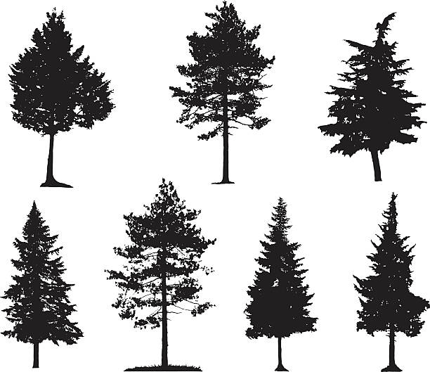 stockillustraties, clipart, cartoons en iconen met coniferous trees silhouettes - cipres