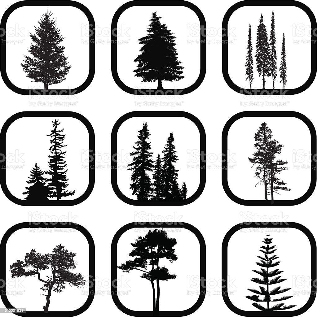 Conifers vector art illustration