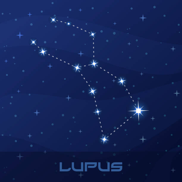 809d067f5 24 Constellation Lupus Clip Art, Vector Graphics and Illustrations ...