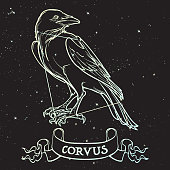 Constellation of Corvus. Black Raven sitting on a banner with a sign. Accurate line drawing isolated on black night sky background with stars. EPS10 vector illustration