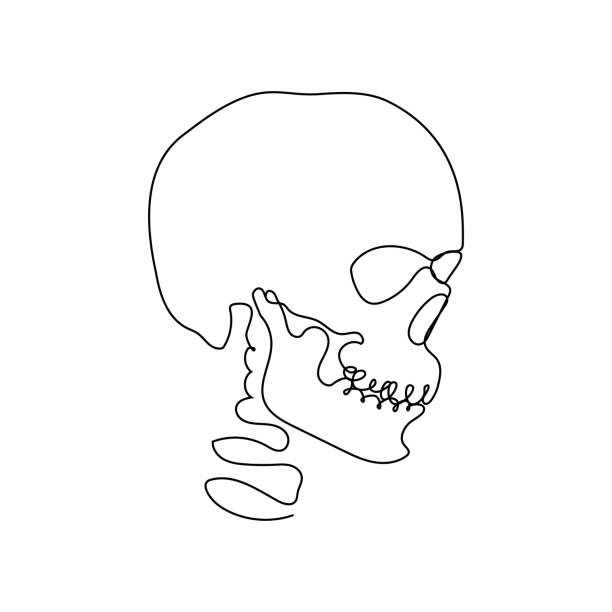 Continuous Human Skull Vector Illustration, One Line Art Continuous thin line human skull vector illustration, minimalist cranium sketch doodle. One line art scull icon, single outline drawing or simple skull logo nautical tattoos stock illustrations