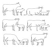 Continuous line drawing of cows and calves in different poses isolated on white for farms, groceries, butchery, dairy products packaging and branding.