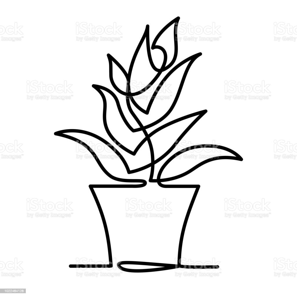 Continuous Line Drawing Of Vector Aloe Vera Logo Icon For Natural Organic Product Package Label Isolated Succulent One Line Leaf Sign For Cosmetic Design Stock Illustration Download Image Now Istock