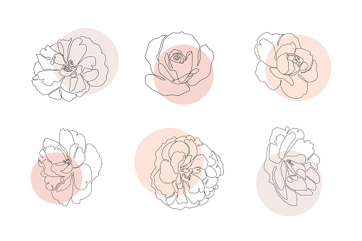 Continuous line flowers set with abstract circles. Trendy single line botanical illustration for print or web. Rose outline vector drawing