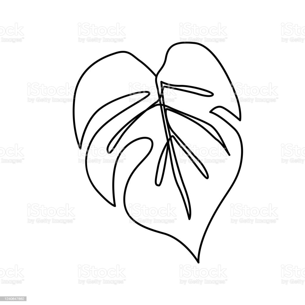 Continuous Line Monstera Leaf Tropical Leaves Contour Drawing Stock Illustration Download Image Now Istock Alibaba.com offers 1,329 artificial tropical leaves products. continuous line monstera leaf tropical leaves contour drawing stock illustration download image now istock