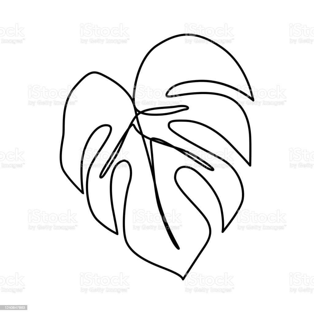 Continuous Line Monstera Leaf Tropical Leaves Contour Drawing Stock Illustration Download Image Now Istock All hand illustrated using art fountain pen by alexia claire and not digitally illustrated in. continuous line monstera leaf tropical leaves contour drawing stock illustration download image now istock
