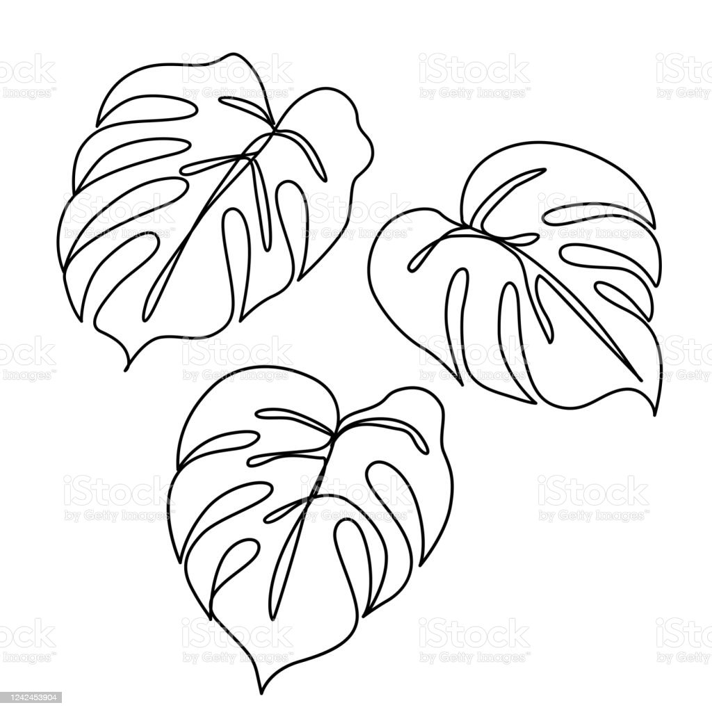 Continuous Line Monstera Leaf Tropical Leaves Contour Drawing Stock Illustration Download Image Now Istock Abstract tropical monstera leaf seamless pattern background. continuous line monstera leaf tropical leaves contour drawing stock illustration download image now istock