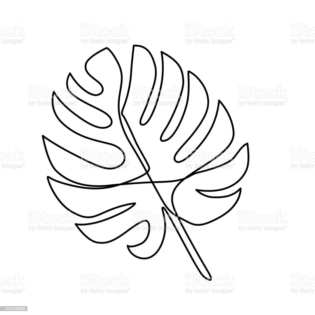 Continuous Line Monstera Leaf Tropical Leaves Contour Drawing Stock Illustration Download Image Now Istock Available in vector, svg, png, dxf & pdf files. continuous line monstera leaf tropical leaves contour drawing stock illustration download image now istock