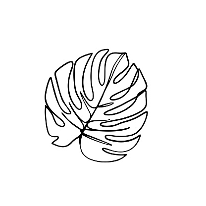 Continuous line monstera leaf. Tropical leaves contour drawing