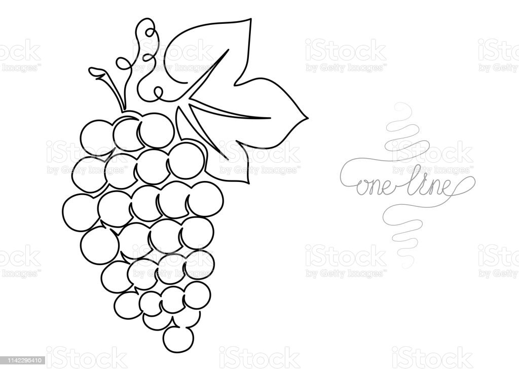Single line drawing. Continuous one line art. Grapes. Hand drawn...