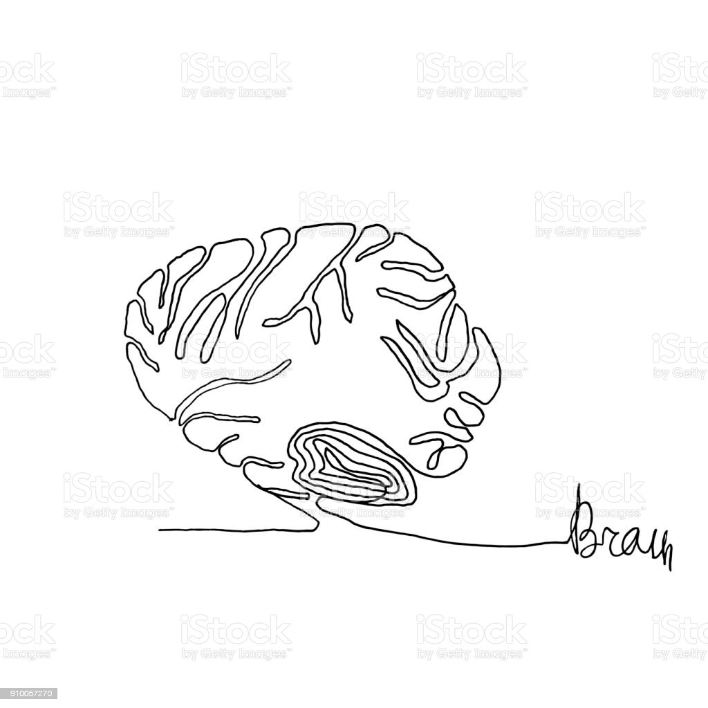 Continuous one line drawing. Anatomy humans brain. Minimalism style. Text Brain. Vector Ink illustration for your design,logo, card, banner, poster, flyer. vector art illustration